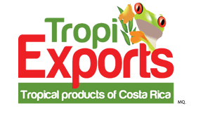Trading Company - Fresh/Frozen Fruits and Vegetables Exporter from Costa Rica, Tropiexports