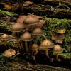 vege_mushrooms